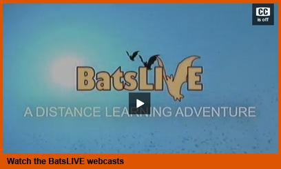 BatsLive